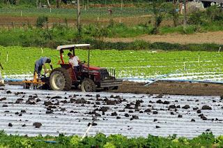 http://vnoticia.com.br/noticia/2885-agricultura-emater-e-bb-renovam-parceria-para-viabilizar-credito-rural-no-estado