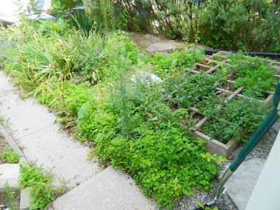 Toronto The Pocket front garden cleanup before by Paul Jung Gardening Services
