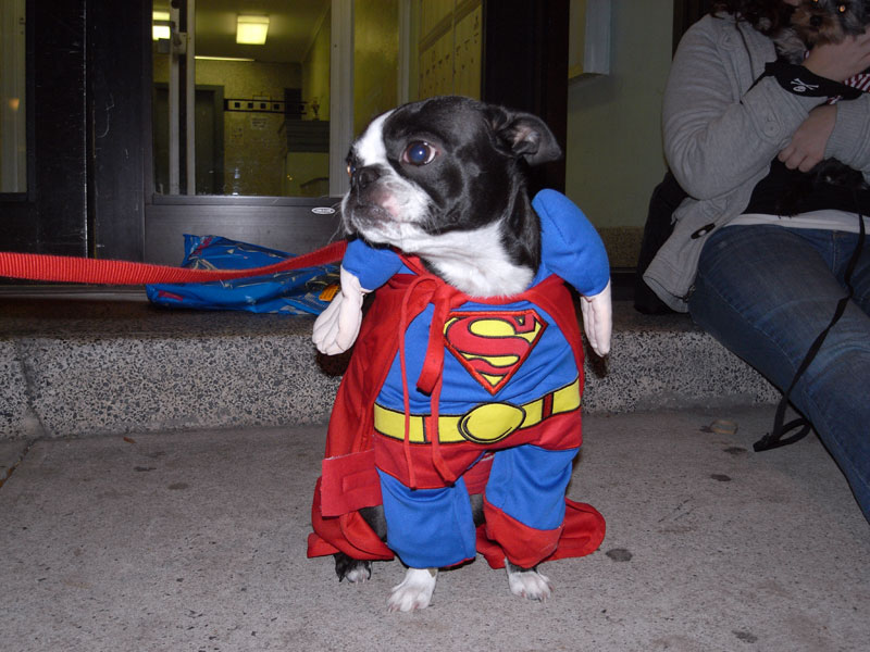 Funny Super Dogs New Images Funny Animals