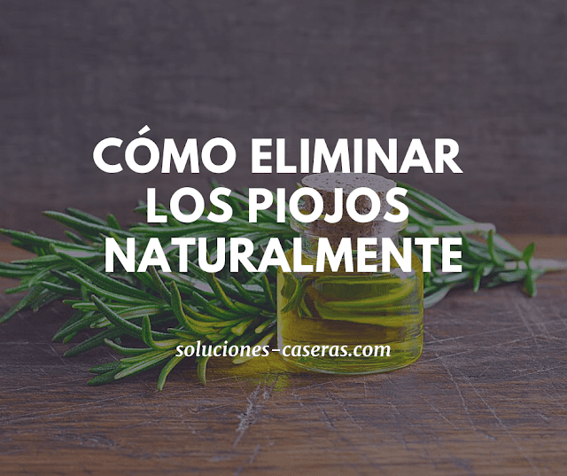 remedio natural para acabar con los piojos