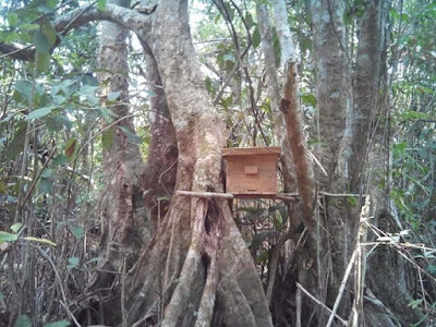 madu hutan liar