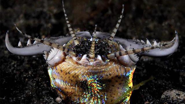 4 Spesies Aneh yang Tersembunyi di Dasar Segitiga Bermuda