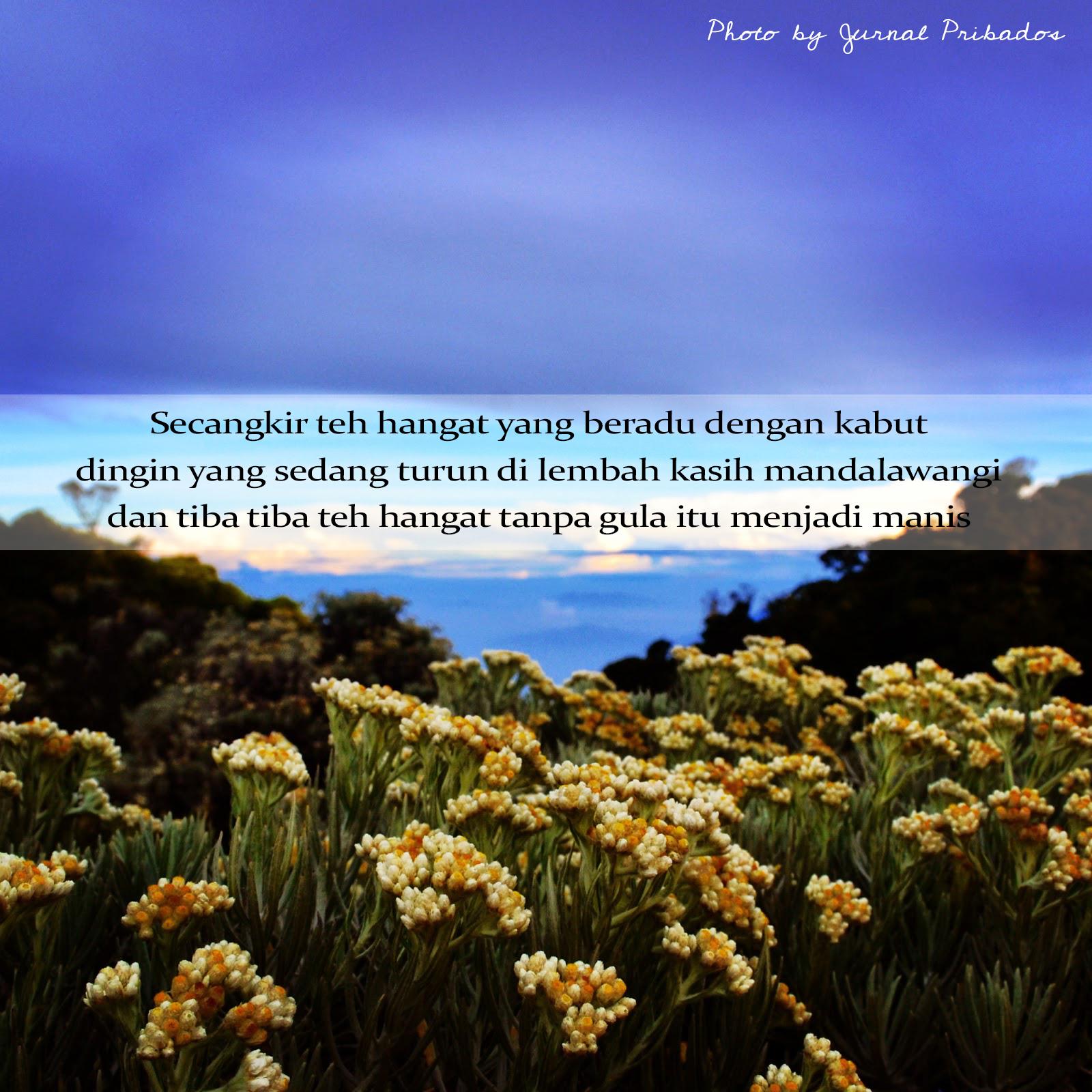 Kata Kata Romantis Bunga Edelweis