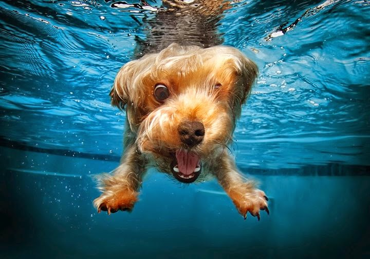 underwater_dog_photography_10_seth_casteel_puppies