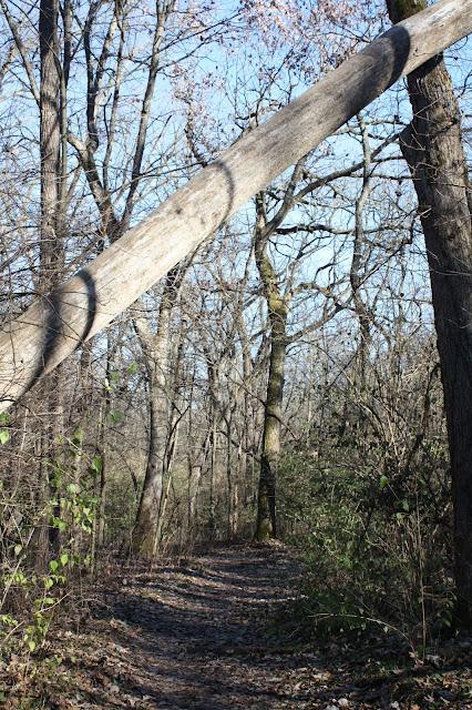 Trees create a unique landscape at Rock Cut