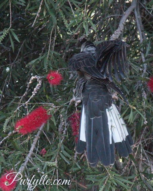 folding her wings away after flight