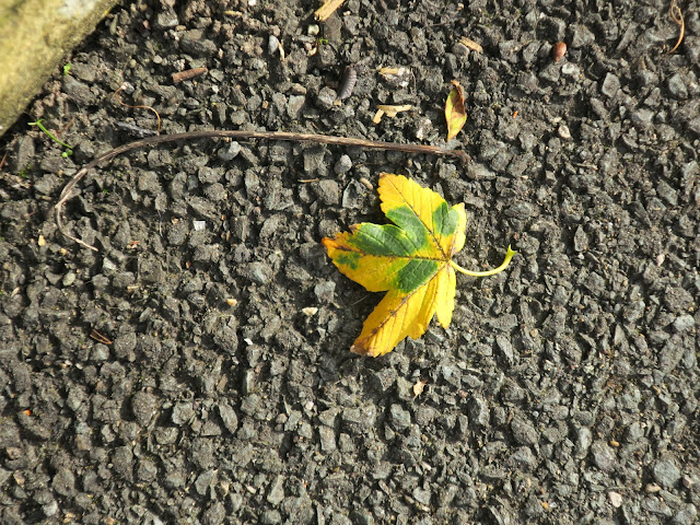 Yellow and green autumn leaf on tarmac with woodlouse and nut