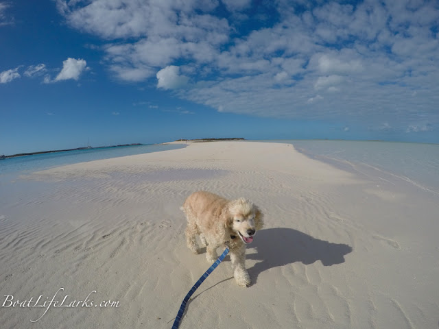 boat dog on the beach, Cambridge Cay