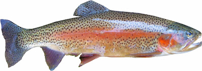 rainbow-trout-fish-with-omega-3-fatty-acids-list-picture