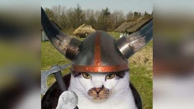 gato caracterizado de gladeador vikingo