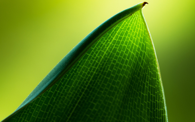 Windows 8 Green Leaf Wallpapers