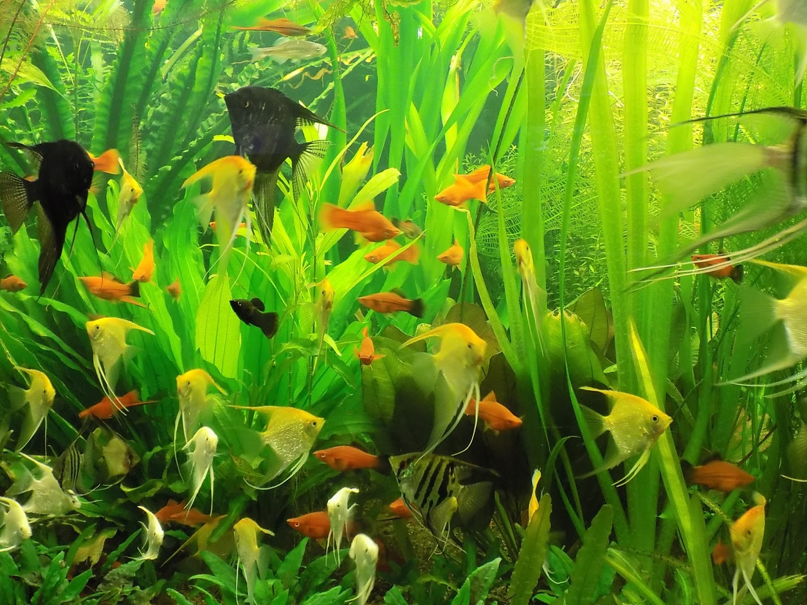 how to clean heavily planted fish tank