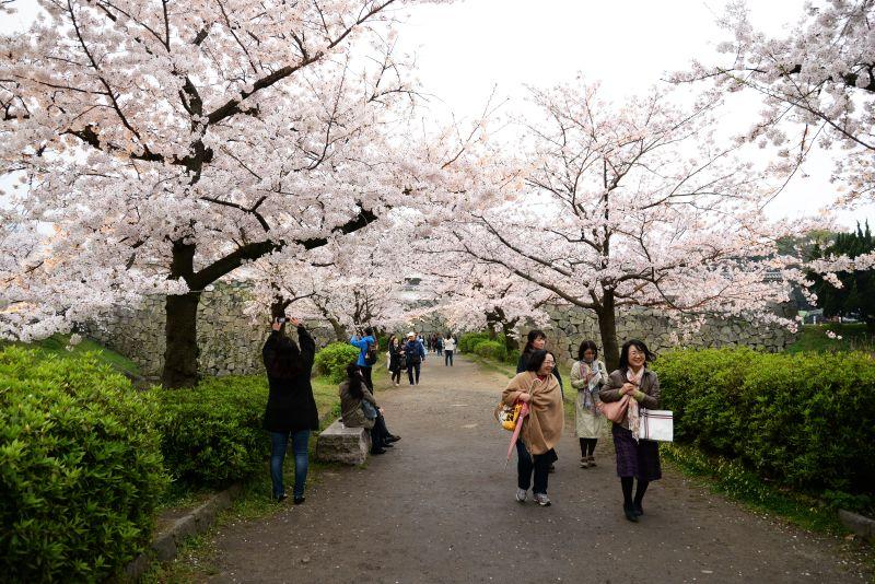 Endless Traveling Map: Fukuoka Castle Sakura Festival 2016 ...