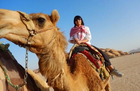 camello_jordania