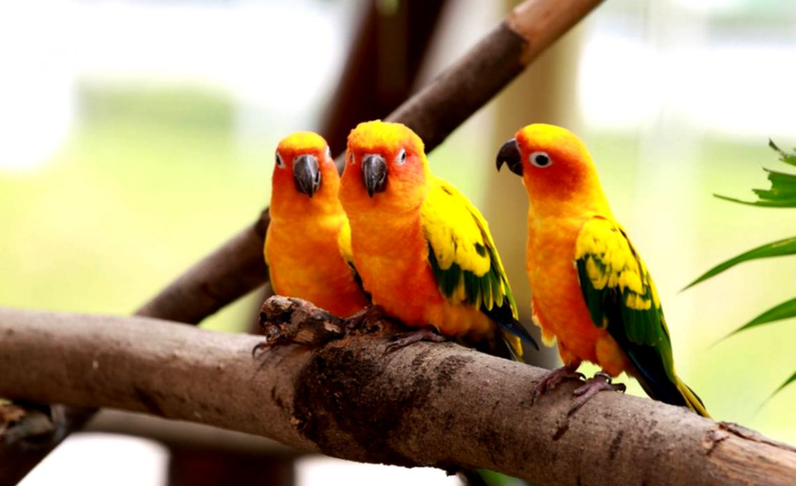 Beautiful Wallpapers Of Love Birds | Wallpapers Mobile