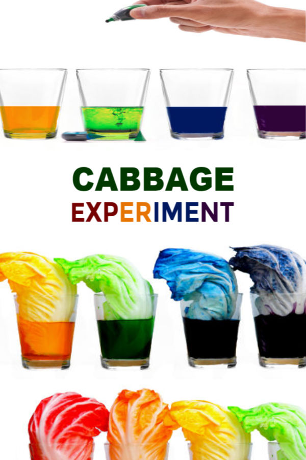 Teach kids about plants and how they thrive with this cabbage rainbow experiment for kids!  This activity requires few items, making it easy to create at home or at school.  Making a cabbage rainbow is great science fair project, too! #cabbageexperiment #cabbagesciencefairproject #cabbagescience #lettuceexperiment #scienceexperiments #scienceexperimentskids #scienceforkids #scienceprojects #sciencefairprojects #kidsscienceexperiments #growingajeweledrose