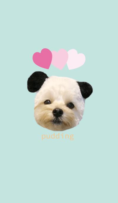 maltipoo pudding theme