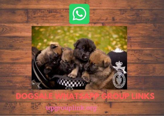 Join 100 Dogsale Whatsapp Group Links List 2019