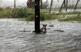 Poor dog abandoned in Texas as flood waters rise
