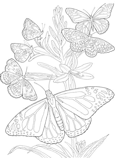 Butterfly Mandala Coloring Pages Related Butterfly Mandala Coloring  Pages Printable Item