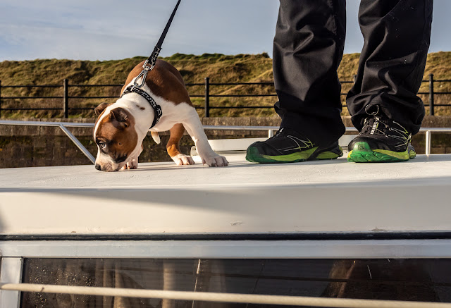 Photo of Ruby on the foredeck above the dinette