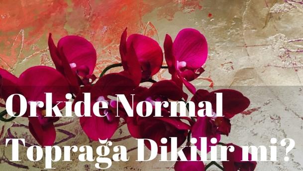 Orkide Normal Toprağa Dikilir mi?