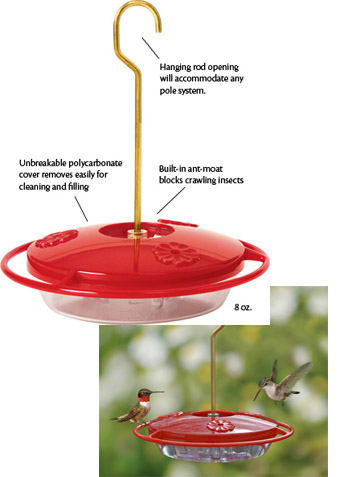How To Keep Bees And Ants Away From The Hummingbird Feeder