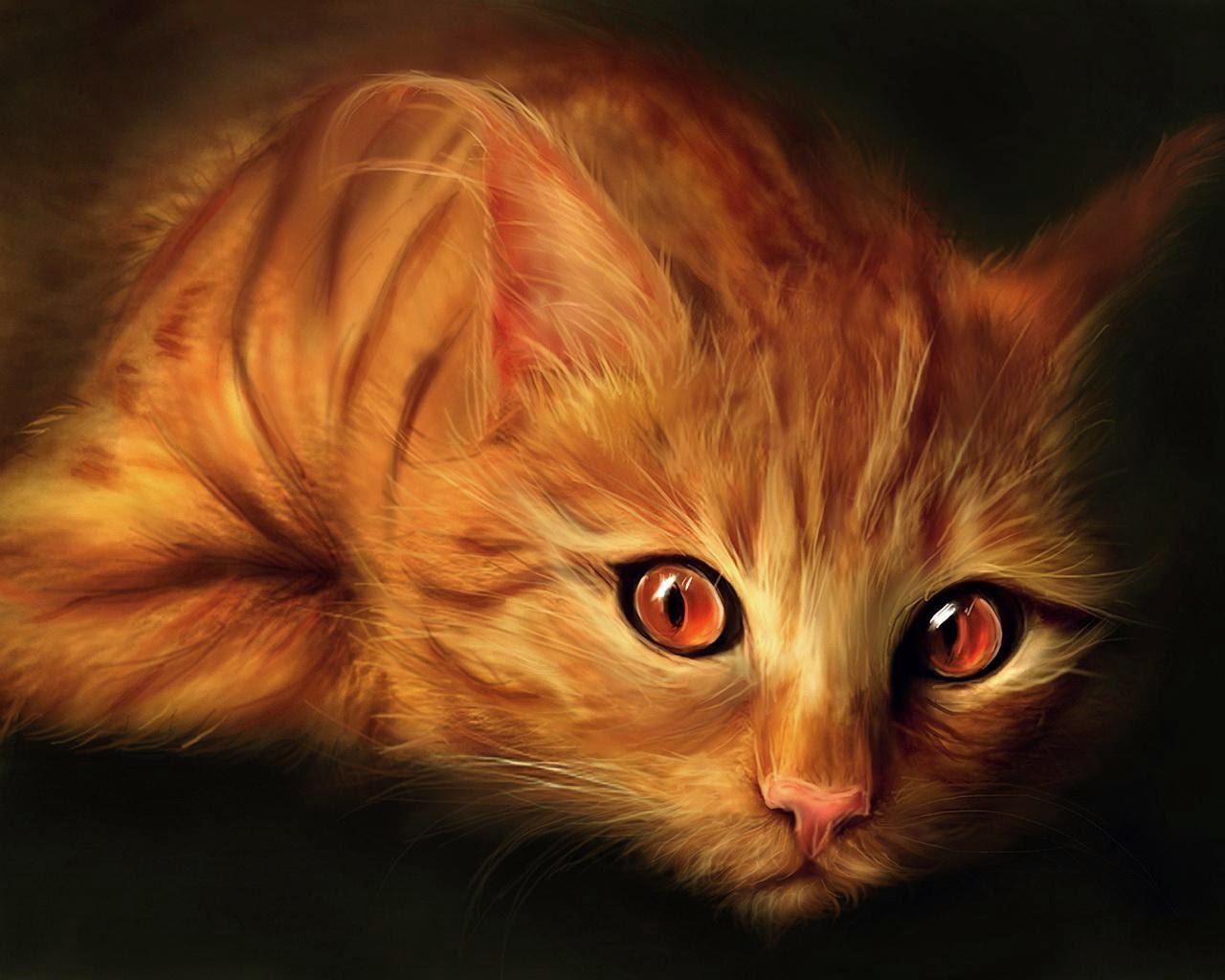 Kucing yang menawan