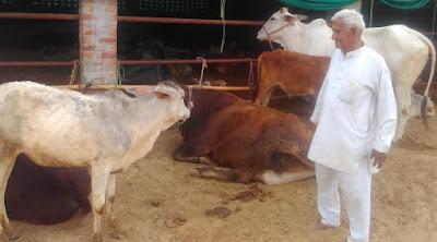shri bal krishna gaushala bhainsru kalan shyam lal narula