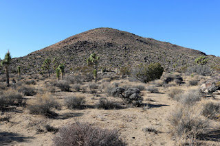 View west toward Negro Hill, Joshua Tree National Park
