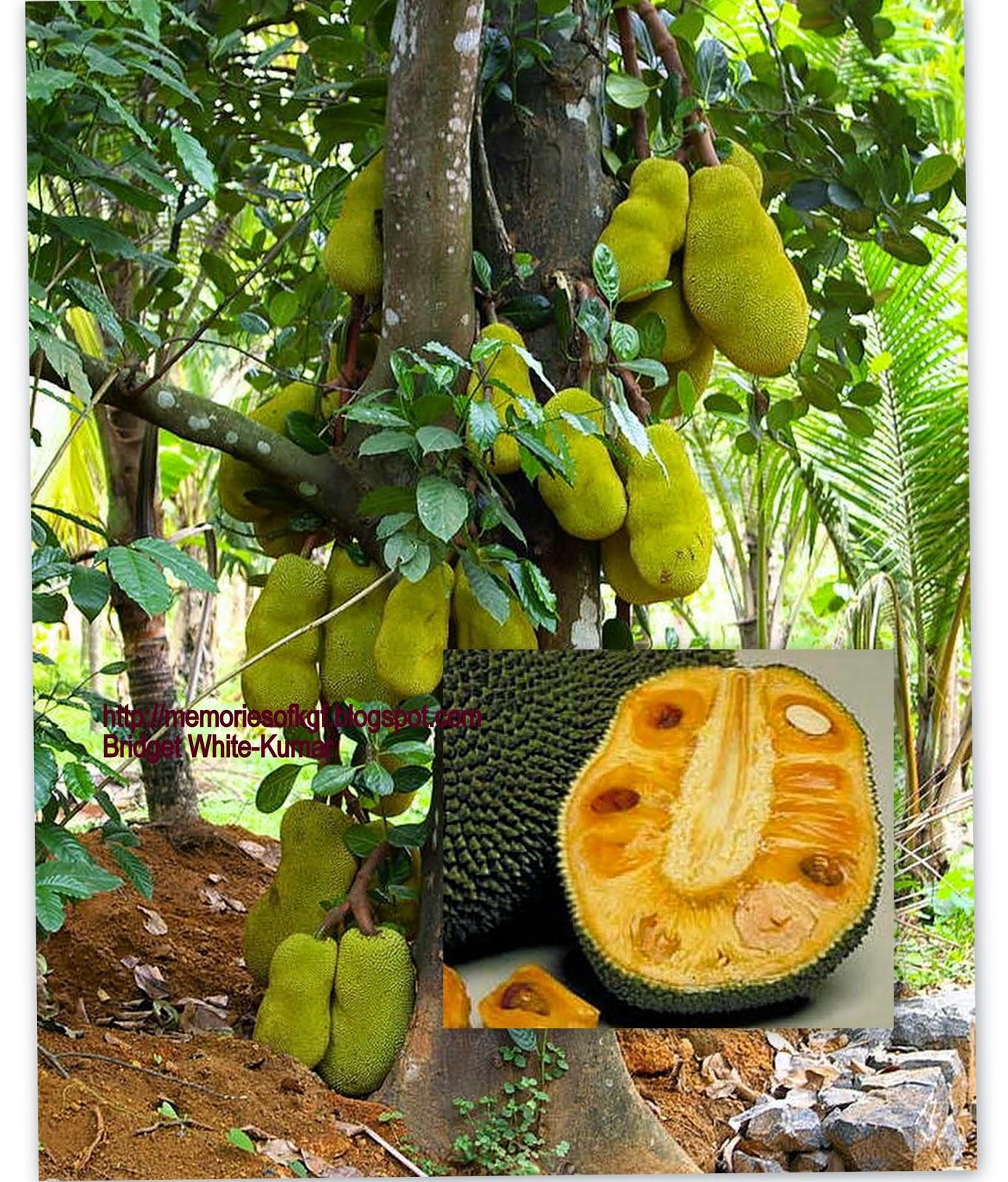 Image Result For Jackfruit