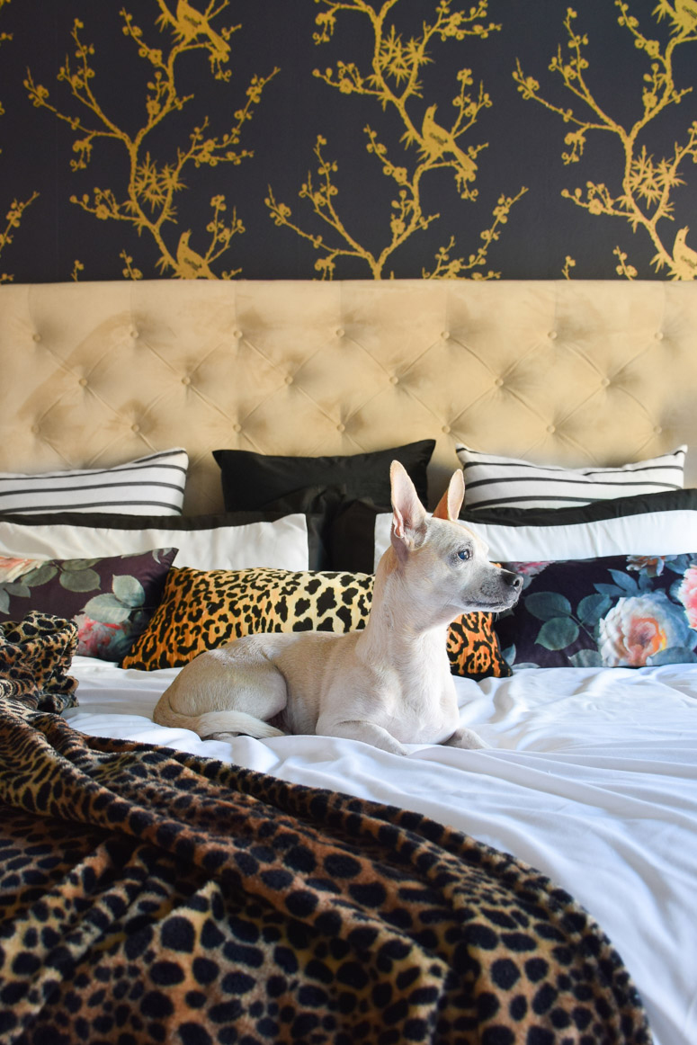 Cute dog laying on a bed in this one room challenge master bedroom makeover.
