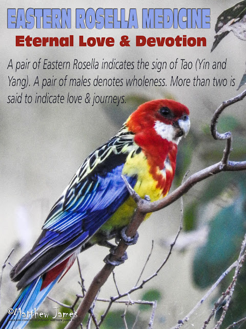 Eastern Rosella Totem Meaning