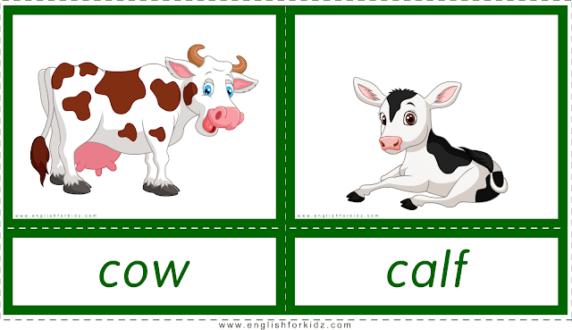 Animals and their babies -- cow - calf -- printable flashcards