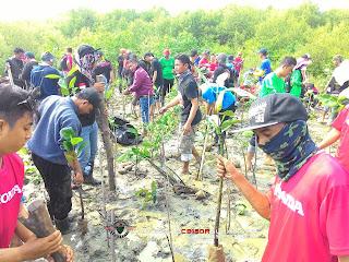 Baksos SHC tanam 1200 mangrove bersama MPM