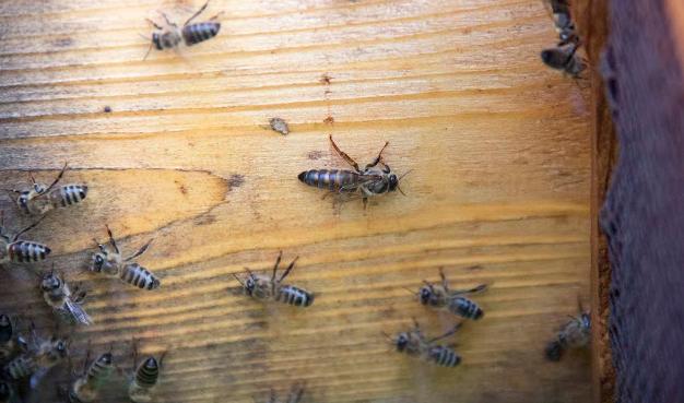 Πως έχασε και το τελευταίο της μελίσσι: Αποχαιρετώντας για πάντα τις μέλισσες