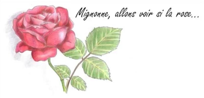 Mignonne - YouTube, Gesang und Gitarre
