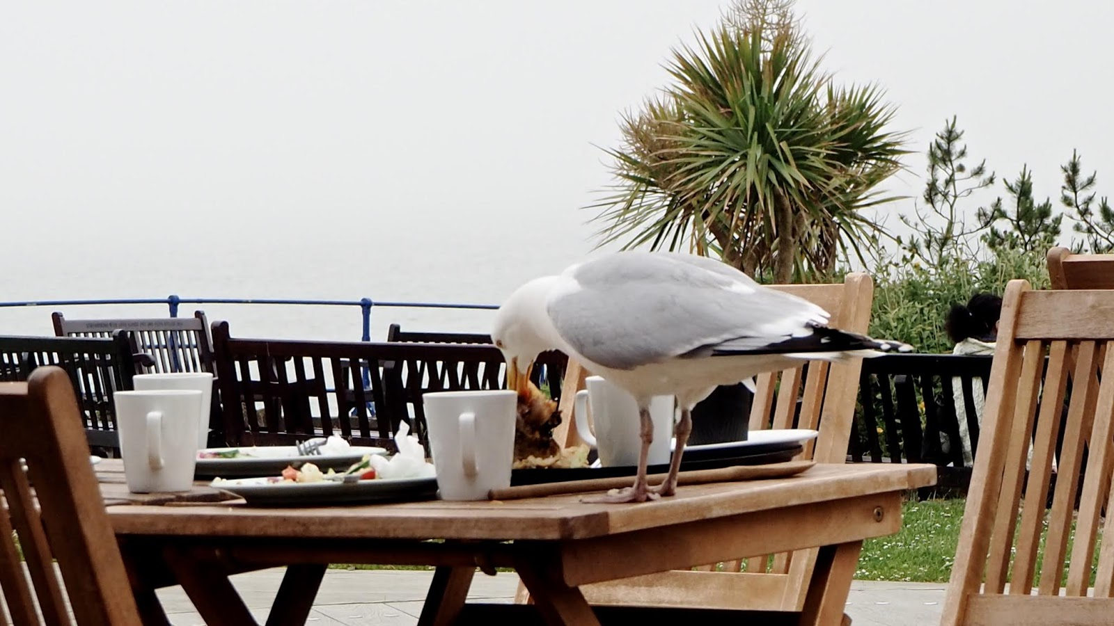 seagull eating a sandwich