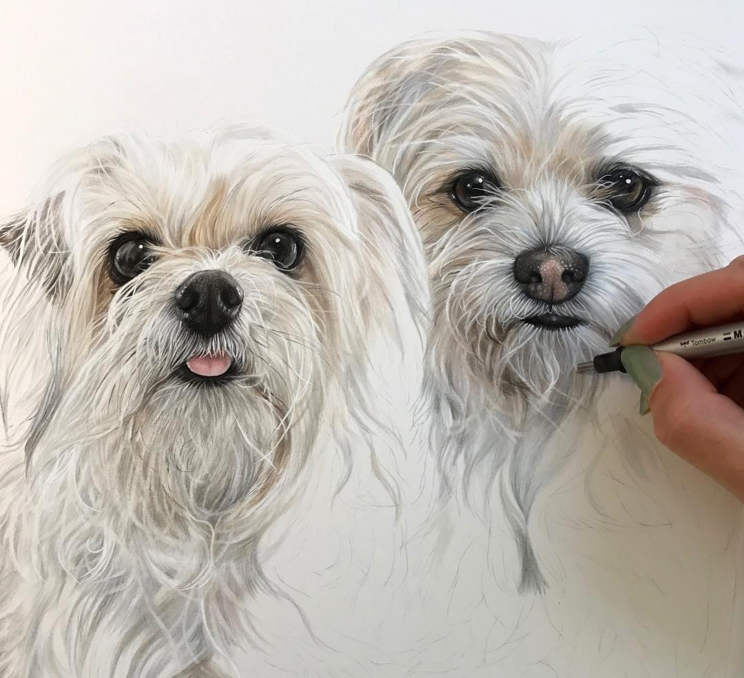11-Seth-and-Olive-Kelly-Lahar-Realism-with-Animal-Portrait-Drawings-www-designstack-co