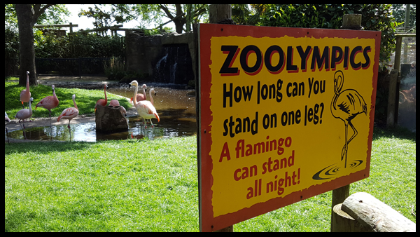 Completing the zoo challenges