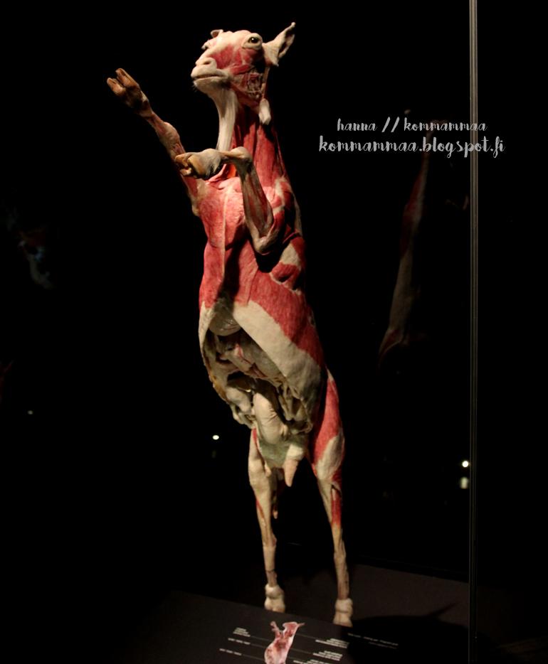 animal body worlds näyttely heureka suomi finland 2017 exhibition