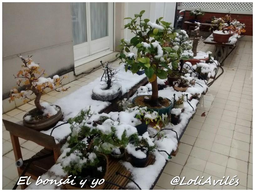 Ola de fr o tambi n para nuestros bons is el bons i y yo for Estanterias para bonsais