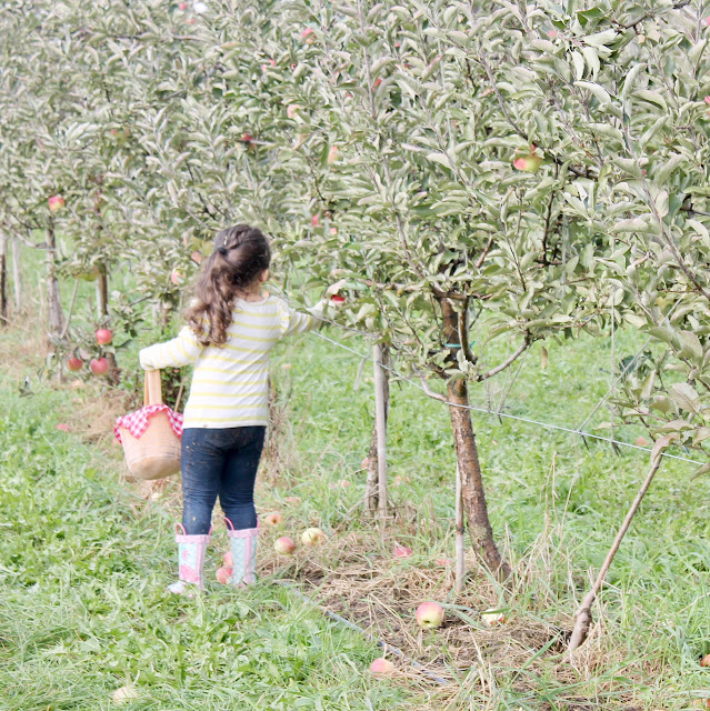 little girl apple picking
