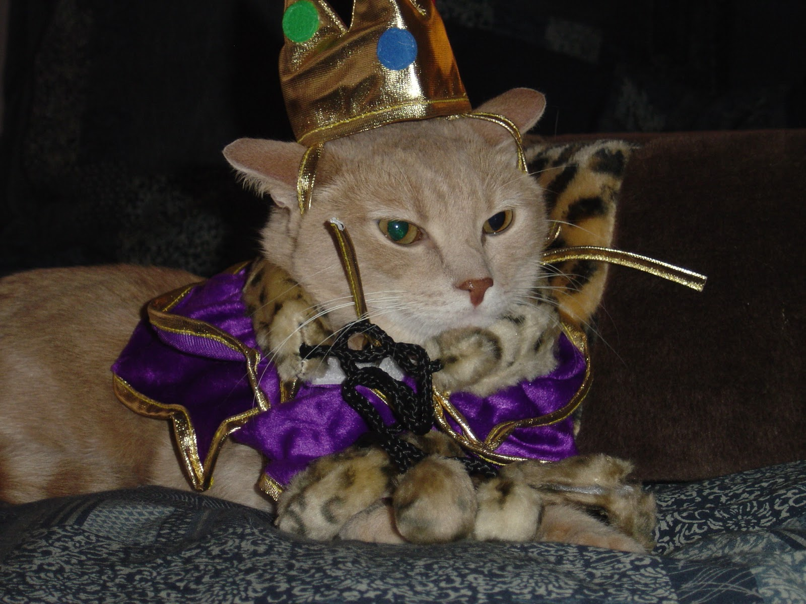Presenting His Royal Highness King Milo the First! by Malingering from flickr (CC-NC-ND)