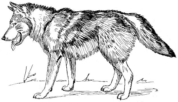 Wolf Coloring Pages For Kids Wolves
