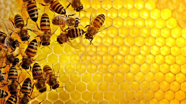 aljami bee garden