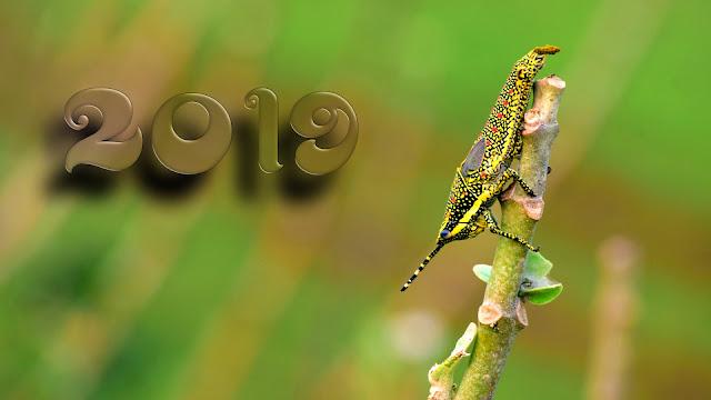 new year whatsapp status gujarati