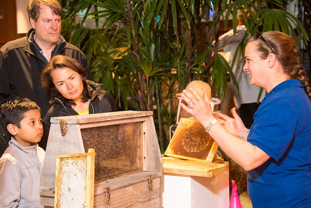 Learning about the lives of bees at Unearth Science Festival. Image courtesy of Chicago Botanic Garden.