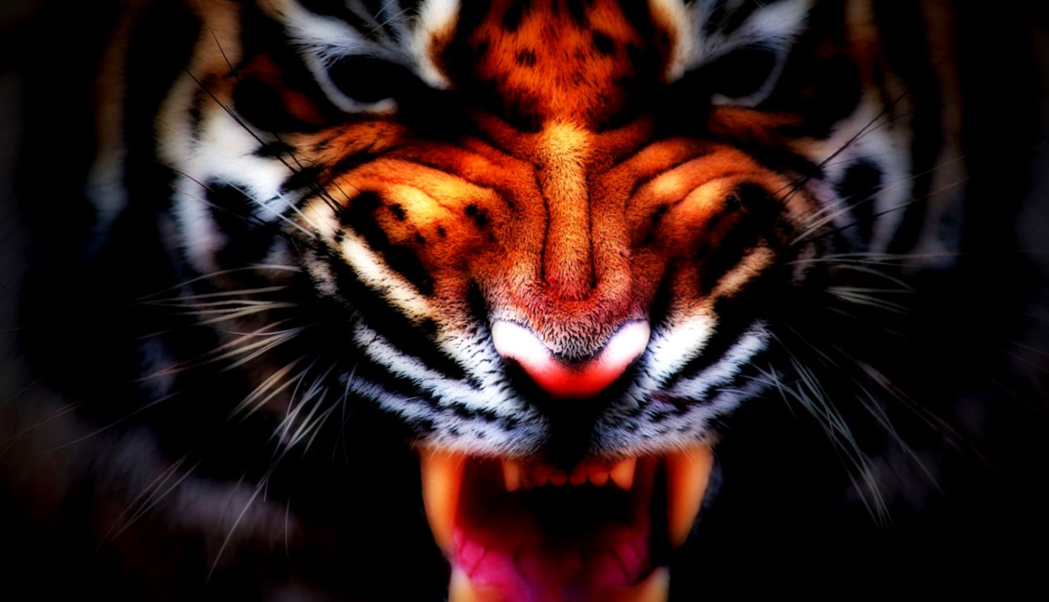 Tiger Wallpaper and Background Image 1600x900 ID335123
