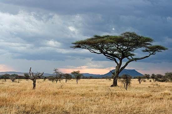 Hành trình thiện nguyện đến Châu Phi của 12 chòm sao
